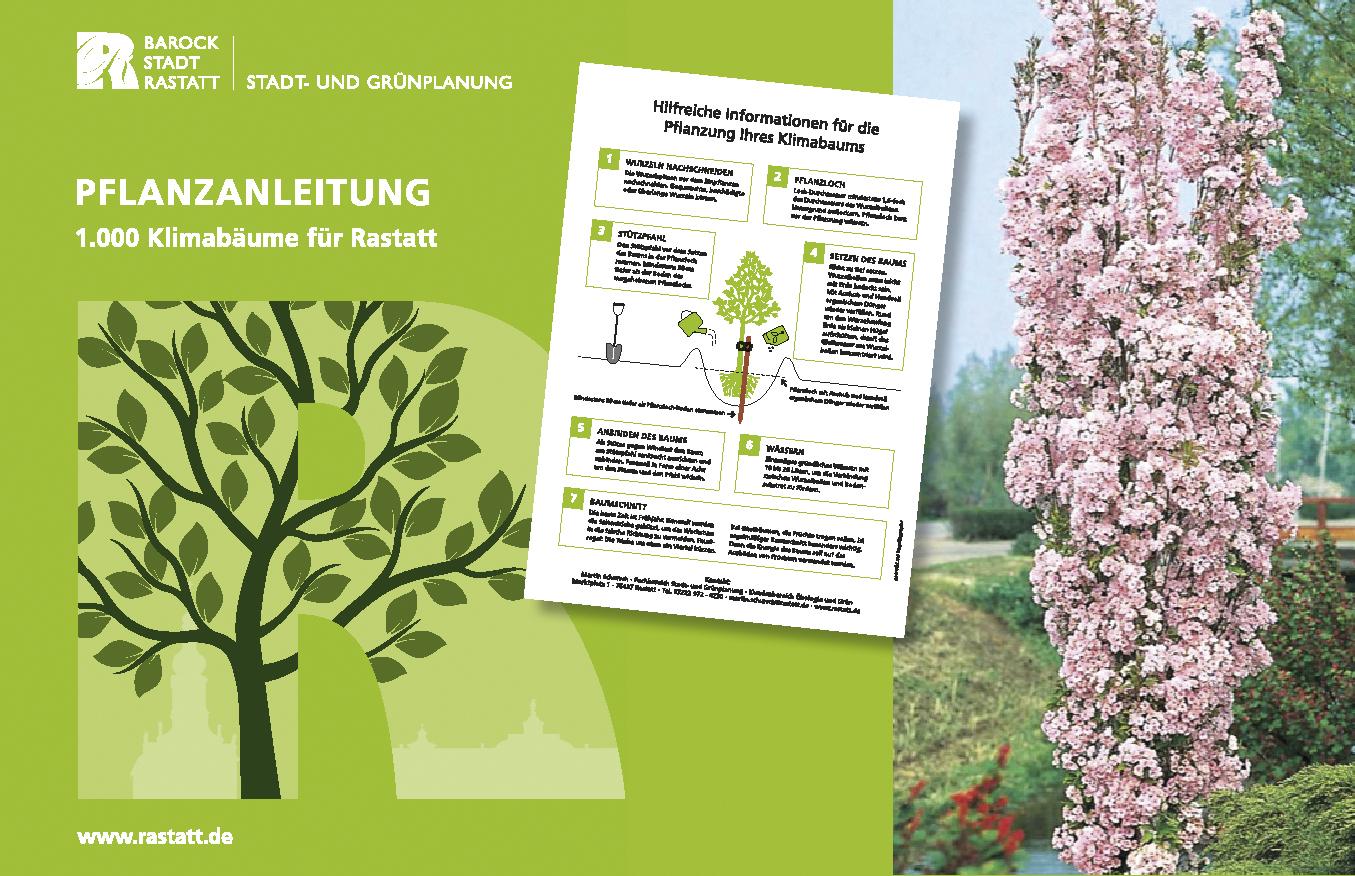 Ein Baum von der Stadt Rastatt